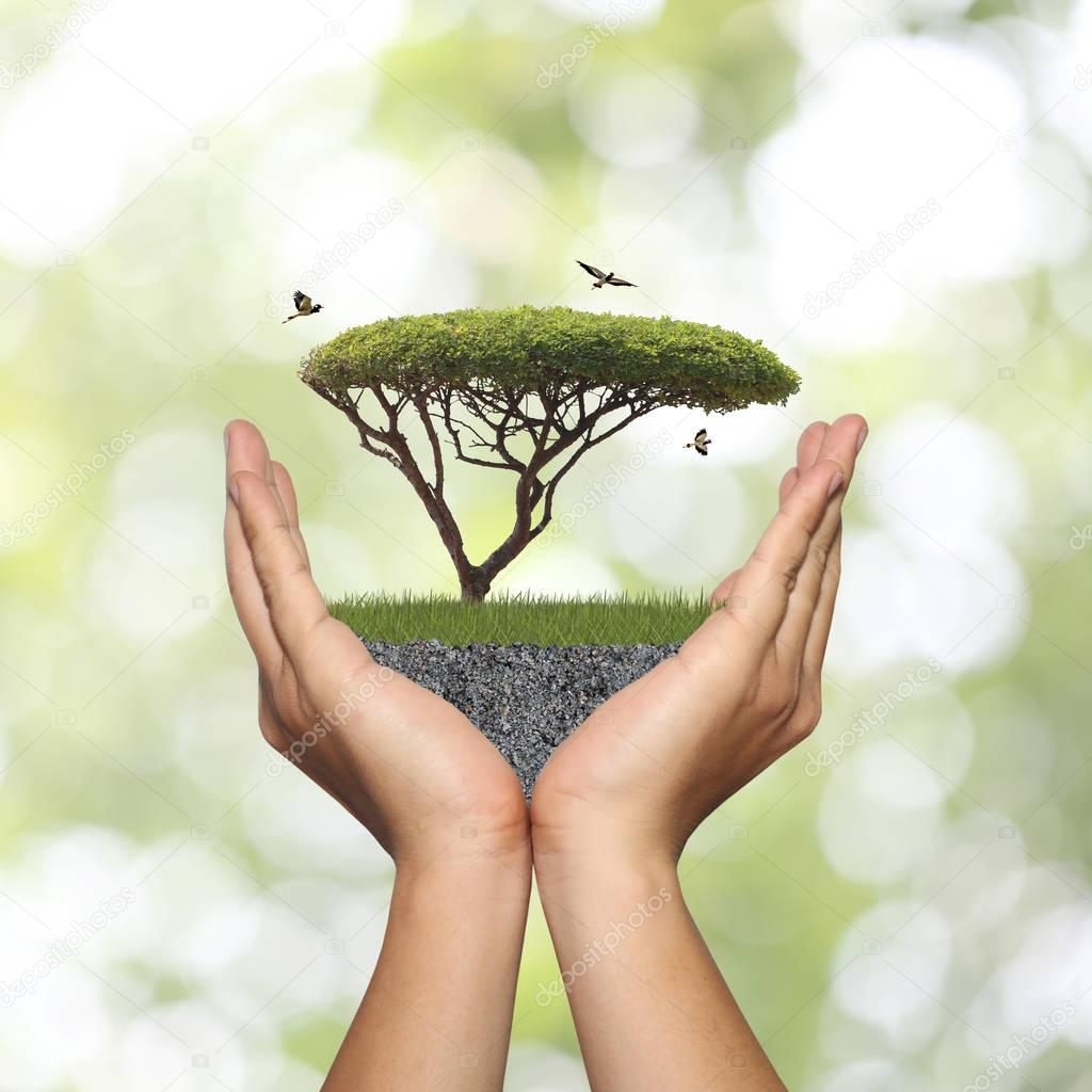 Tree in hand with green grass and ground.