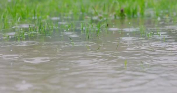 Dešťové kapky padaly na zatopený trávník, na mokrém dvorku pršelo zpomaleně. Rozlišení 4k