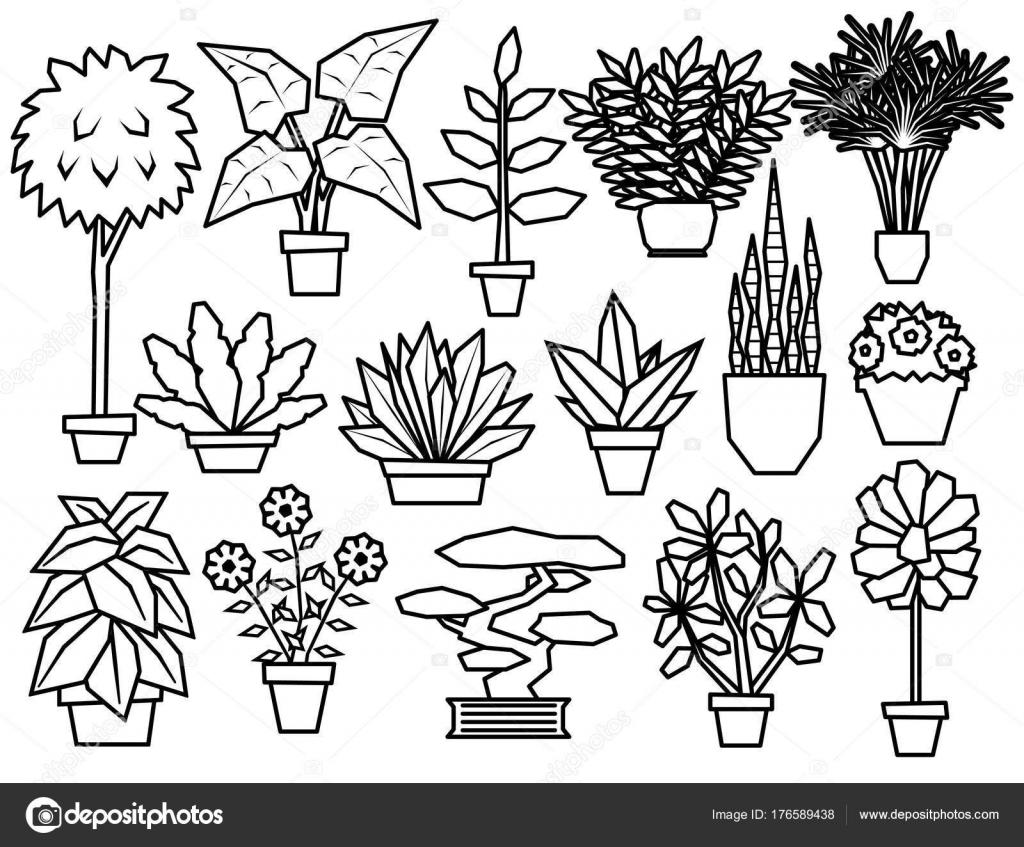 Imagenes Animadas Para Colorear: Dibujos: Plantas Vasculares Para Colorear
