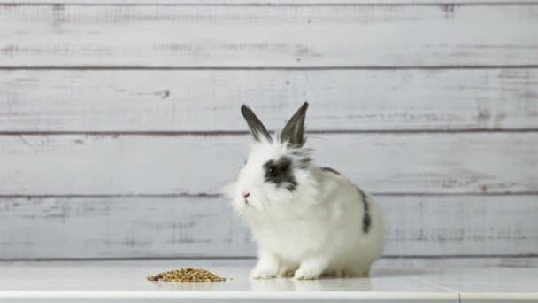 Close-up of cute white bunny is eating dry rodent food mix on wooden background. Balanced feed with cereals, seeds, peas, dried vegetables. Concept of balanced food for rodents