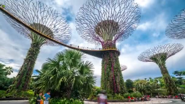 Timelapse Landscape of Gardens by the bay in Singapore. August 2017
