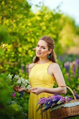 A young beautiful girl in a yellow dress holds a basket of purple lupins in a blooming field. Blooming Lupin flowers. environmentally friendly. The concept of nature. Soft focus.