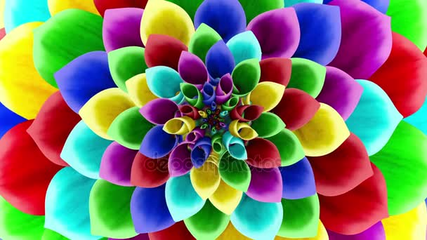 Opening Of The Multicolored Flower. Looped