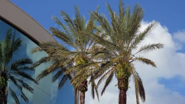 Palm trees near the office building and clouds, business