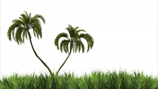 Render grass and palm in the wind on a white background. Blank for design