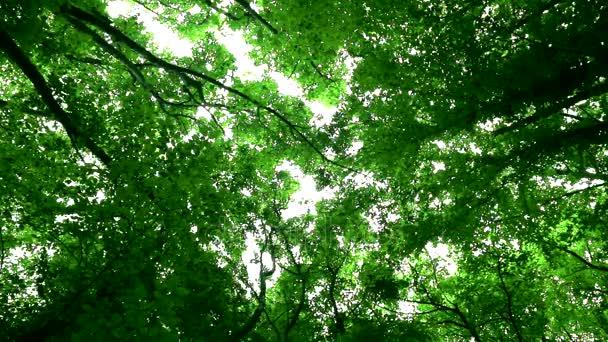 Ptáci zpívají v zeleném lese