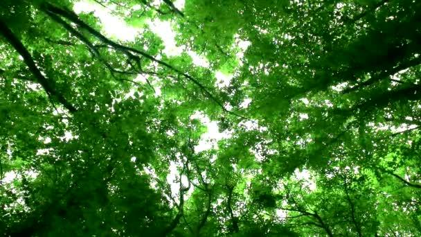 Vögel singen in einem grünen Wald
