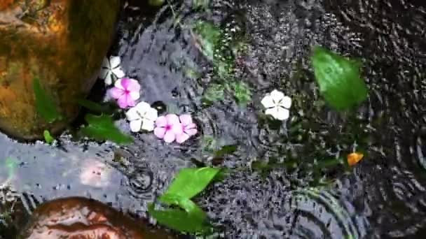 Horní pohled na rybník s růžovými květy a rostlinami.