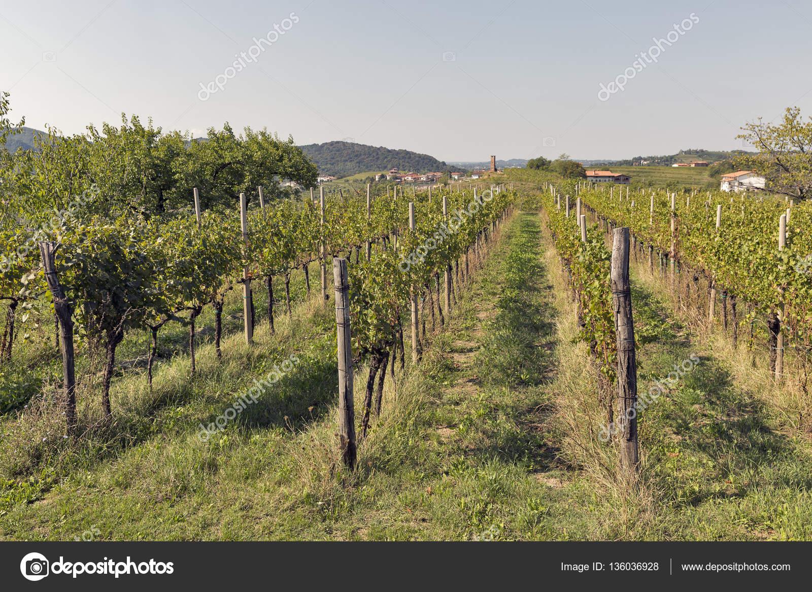 Giardino Mediterraneo Rurale Con Vigneto E Alberi Da Frutto