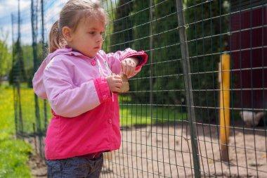 Little girl feeding chickens on the farm
