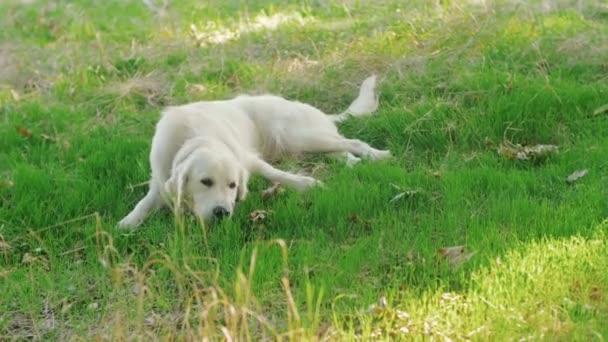 kutya a zöld park