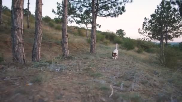 Puppy runinng in meadow