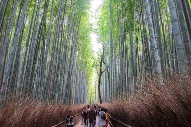 Arashiyama Bamboo Grove or Sagano Bamboo Forest, is a natural fo