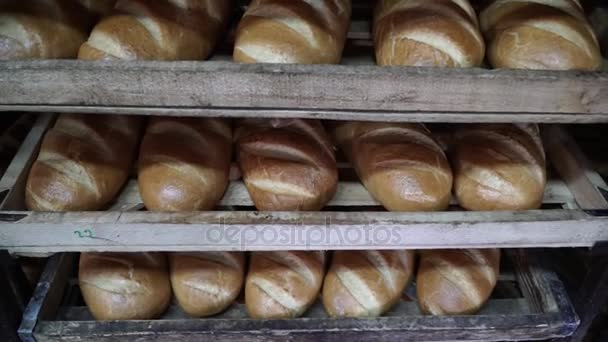 Production of bakery products in a bakery. The baker kneads the dough for baking buns.