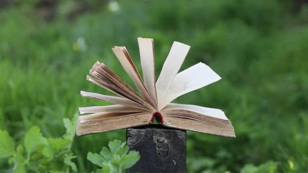 nyitott könyv egy fa kender a fűben délután a lógó nap