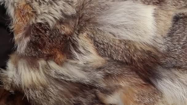 fur coat from pieces of fur of different animals as a background closeup