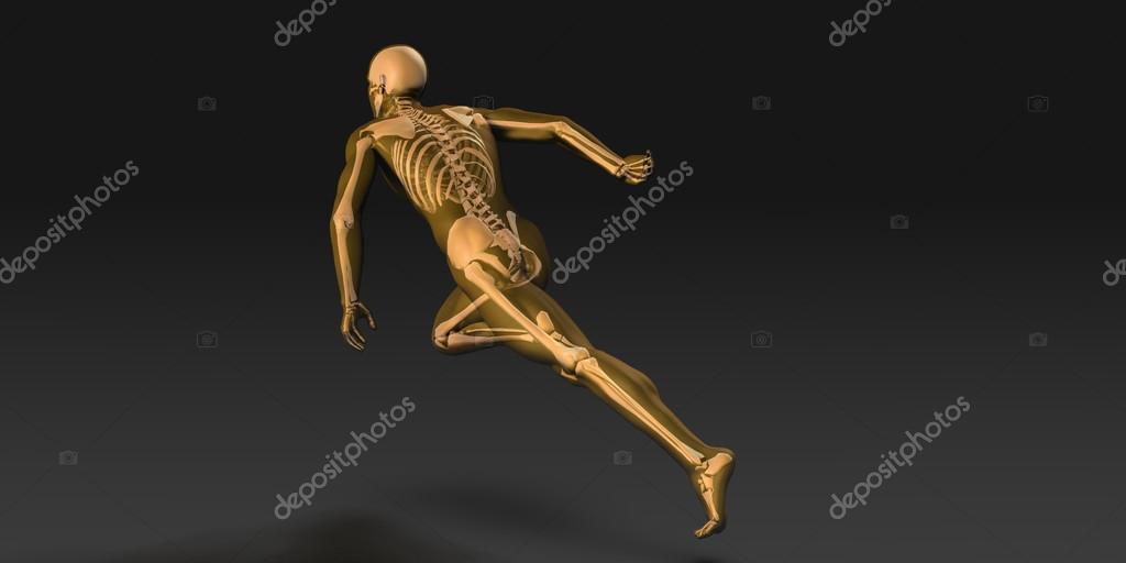 Anatomía humana con Visible esqueleto y los músculos — Foto de stock ...