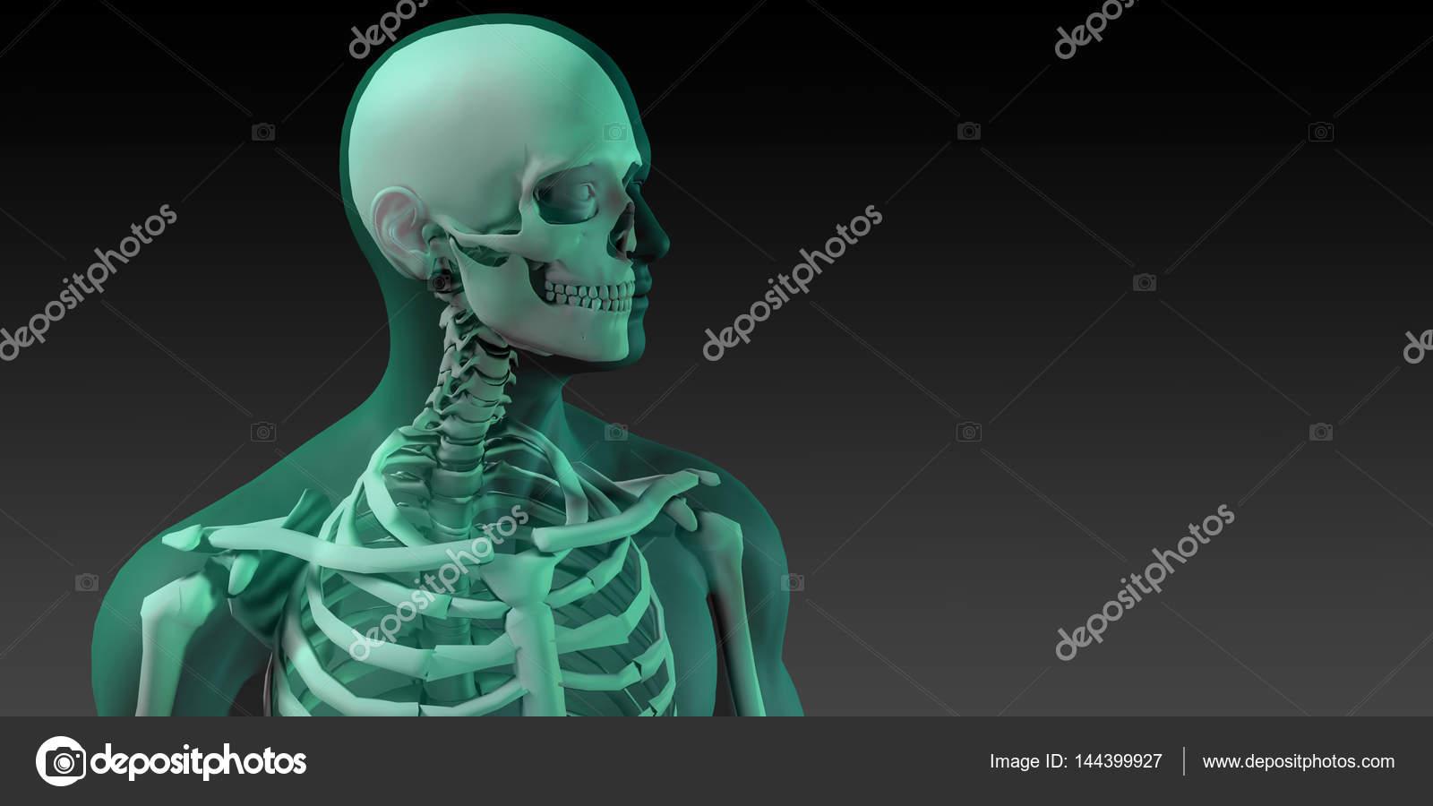 Ilustración médica de huesos y cuerpo humano — Foto de stock ...