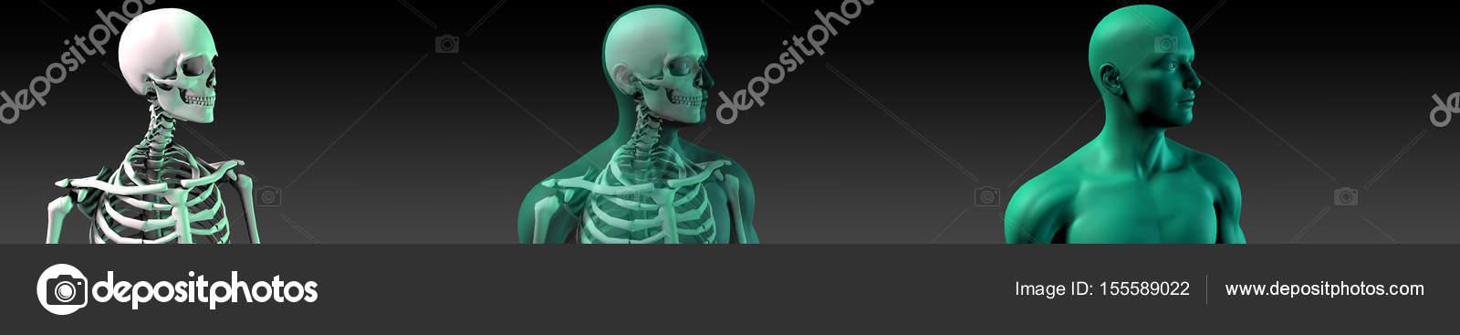 Diagrama de la estructura de hueso humano — Fotos de Stock © kentoh ...