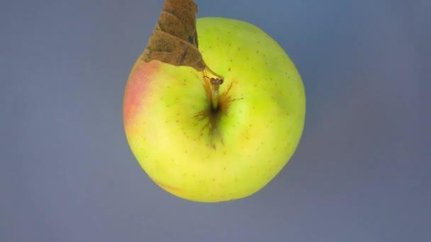 Az alma körbe forog. Élelmiszer videó.