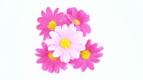 Wildflowers on a white background. Holidays. Mothers Day. International Womens Day. Valentines Day.