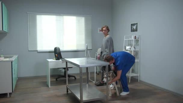 Veterinář v uniformě vezme psa a položí na stůl ve skříni
