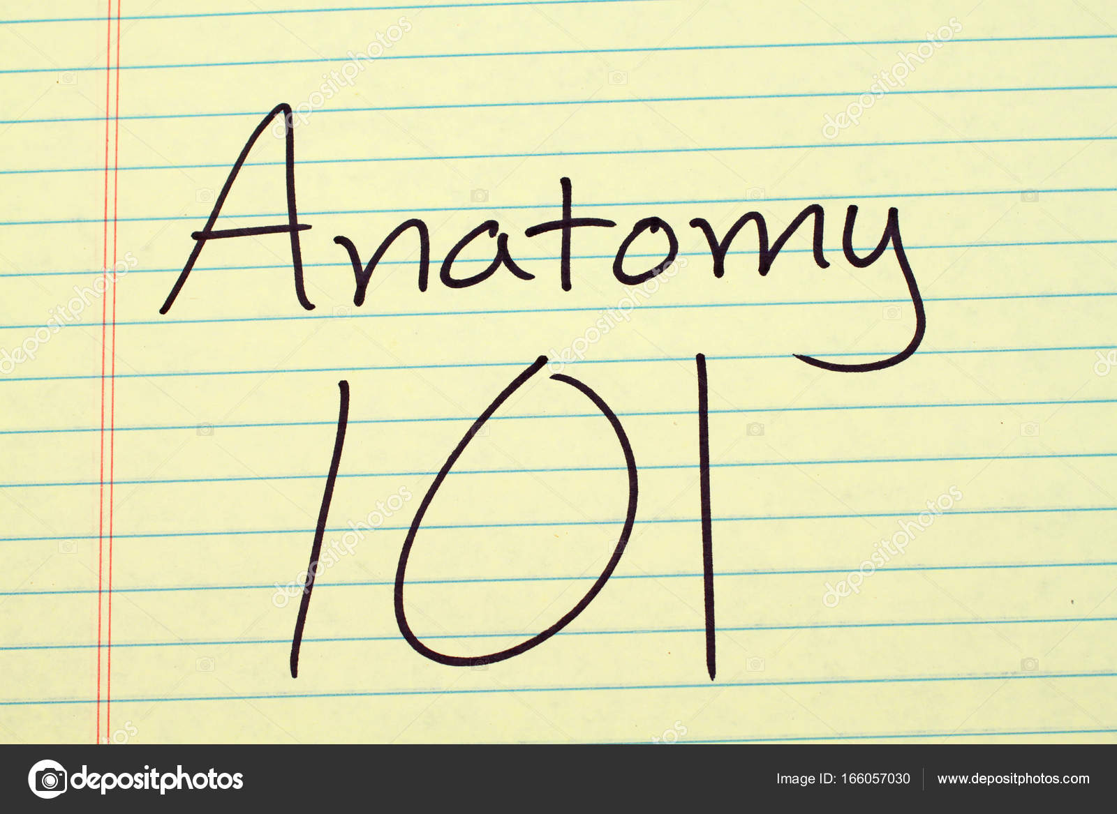 Anatomía 101 en una plataforma Legal amarillo — Fotos de Stock ...