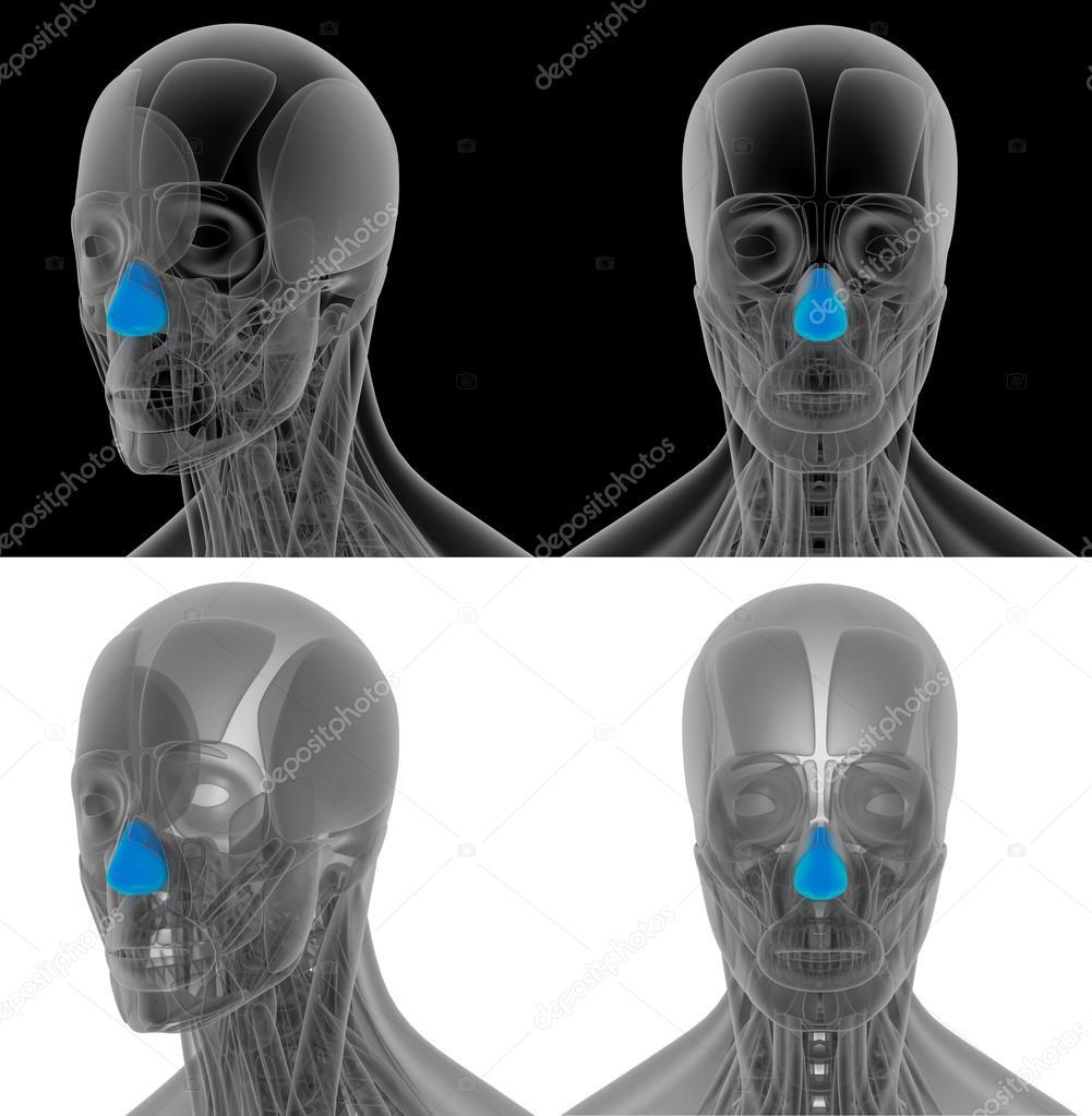 Ilustración de render 3D de la nariz dilatador — Foto de stock ...