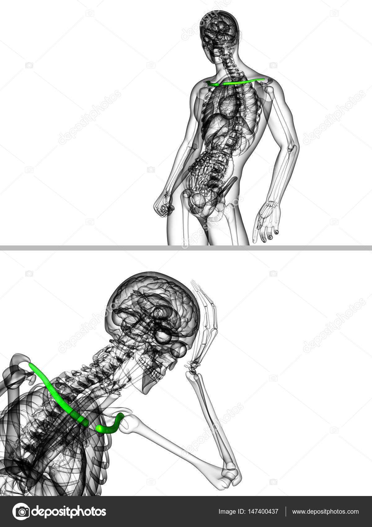 鎖骨の骨の 3 D レンダリングの医療イラスト ストック写真 Maya2008