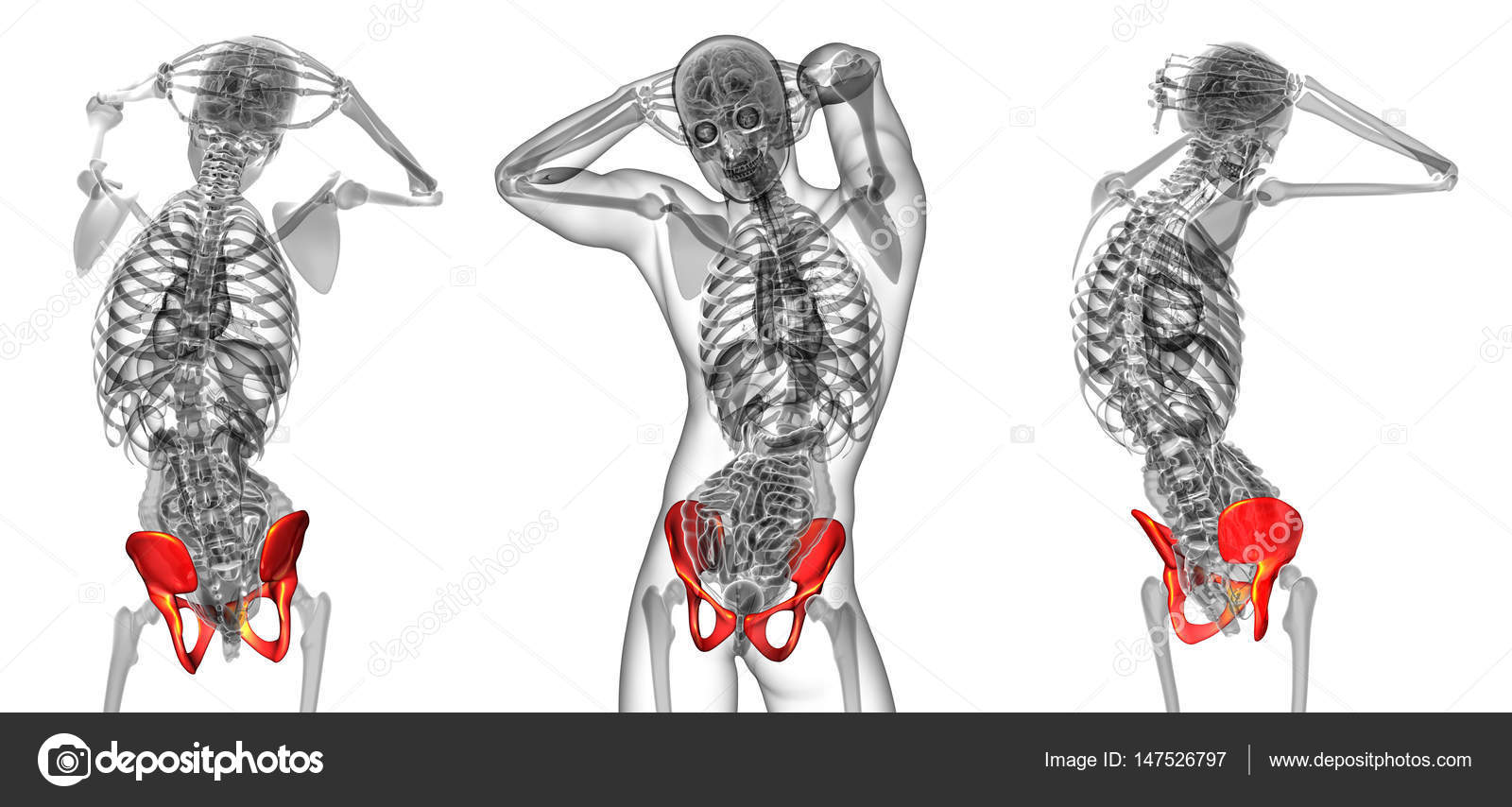 3D Rendering medizinische Illustration der Becken-Knochen ...