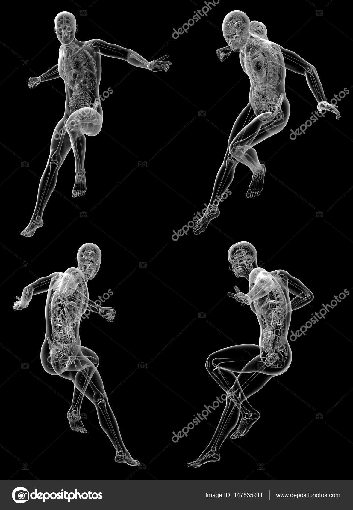 3d Rendering Medical Illustration Of The Human Anatomy Stock Photo