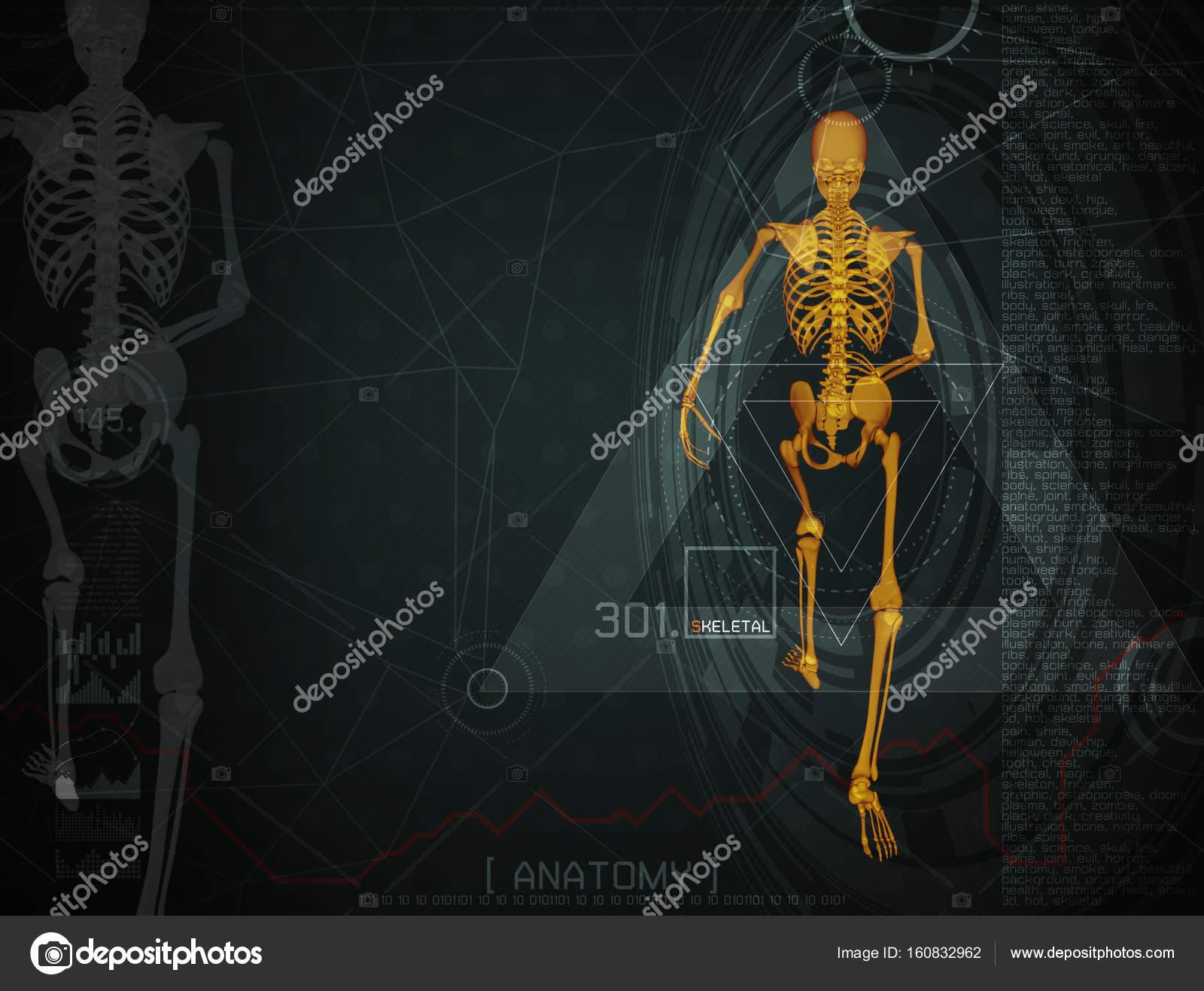 Ungewöhnlich Anatomie Und Physiologie Skelettsystem Studienführer ...