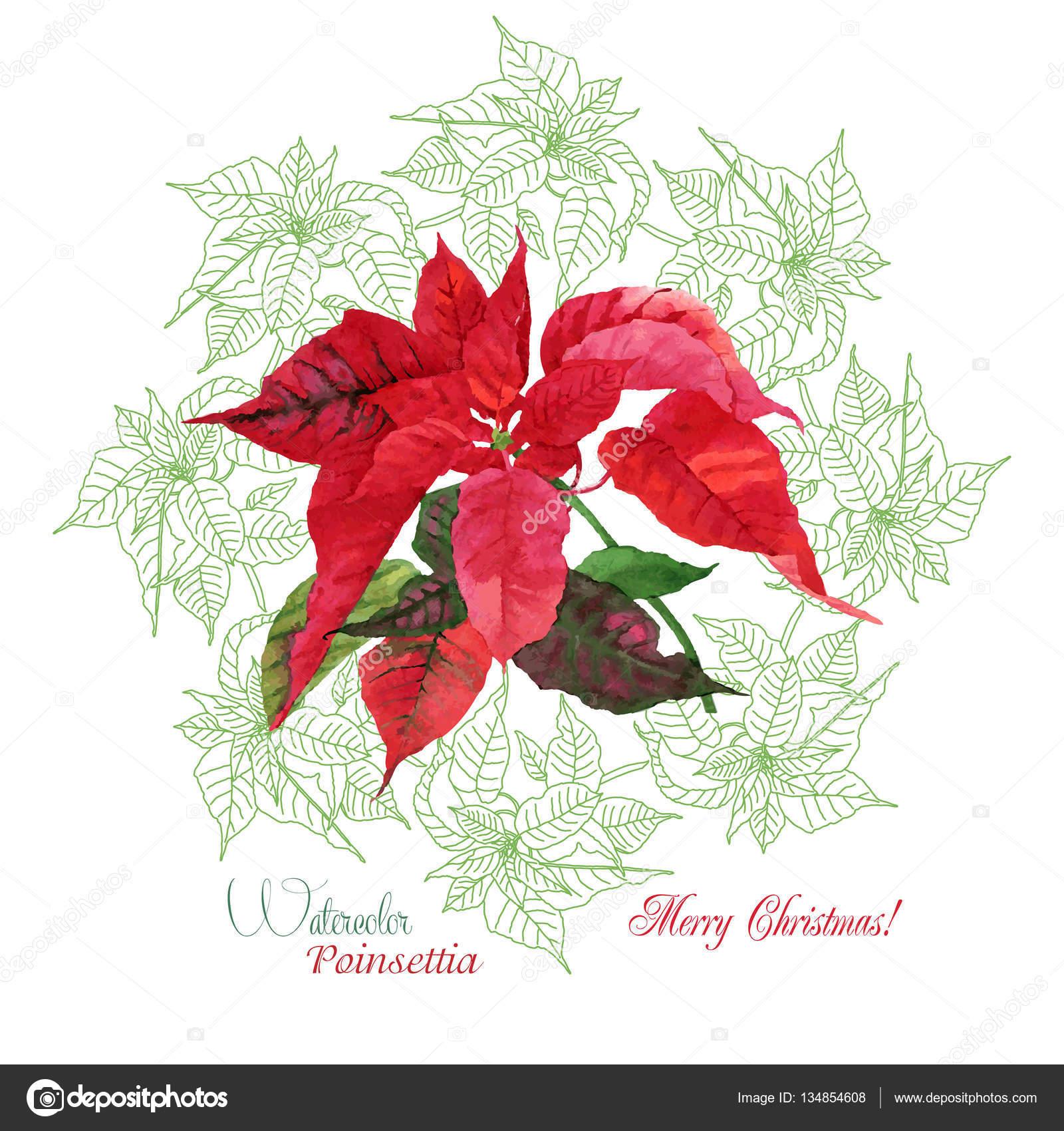 Hintergrund mit Bouquet von weihnachten weihnachtsstern ...