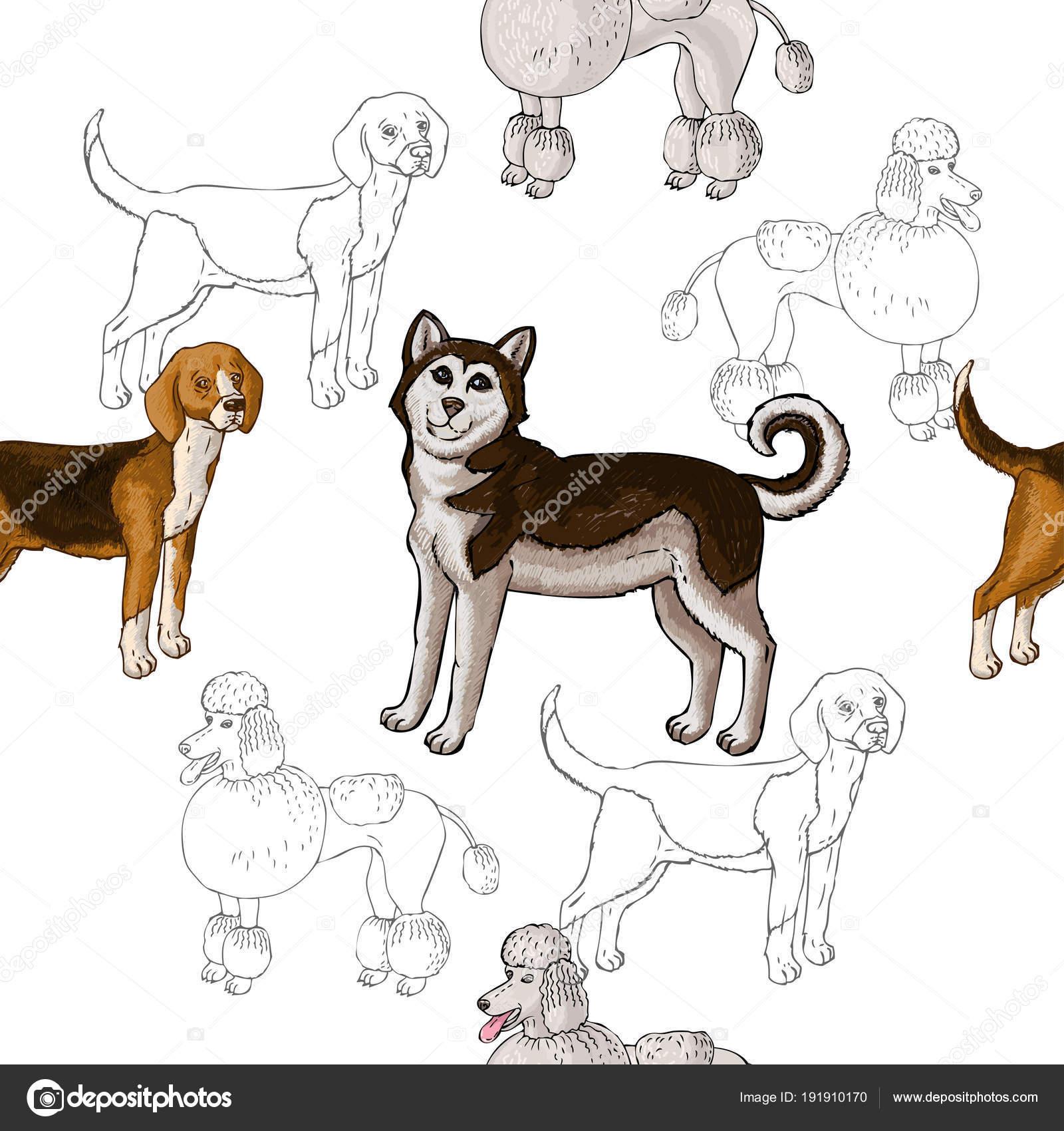 Imágenes: de perros   Patrón sin fisuras con los perros. Perros ...