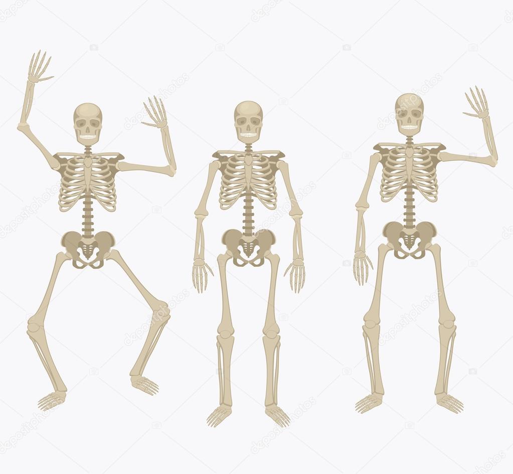 Esqueleto humano. Esqueleto de silueta en diferentes posiciones ...