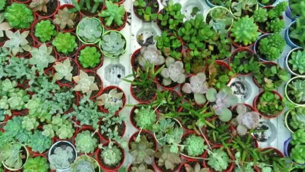 Posunout pravý horní pohled rozmanité sukulenty mini rostlin v květináčích