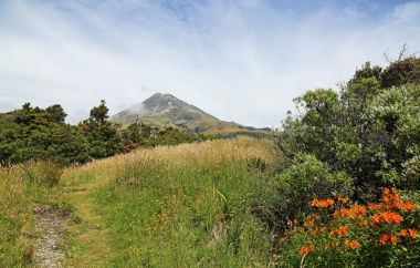 Landscape in Taranaki / Mt Egmont National Park, New Zealand