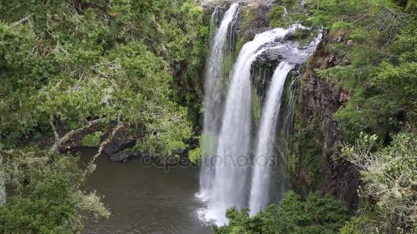Strom a Whangarei Falls - Severní ostrov, Nový Zéland