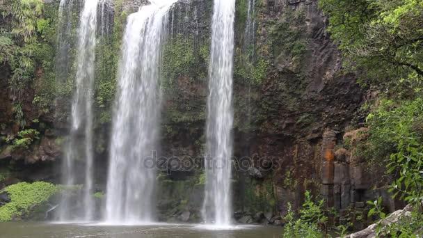 Whangarei Falls - Nový Zéland