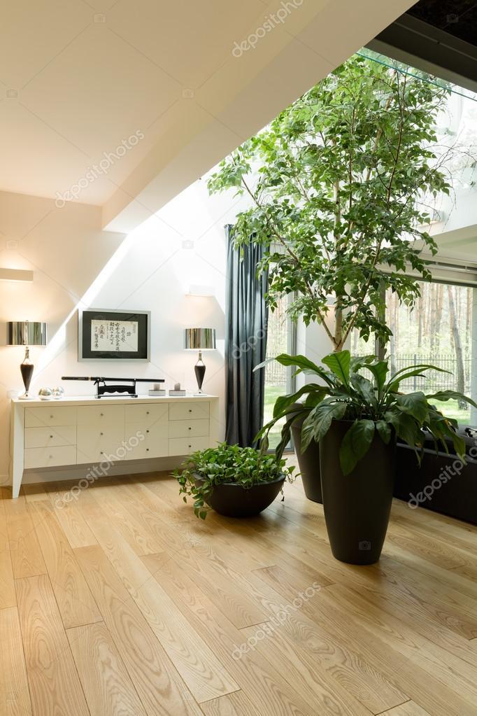 Plantas decorativas en nueva sala de estar foto de stock for Plantas decorativas hidroponicas