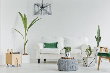 Living room with decorative houseplants