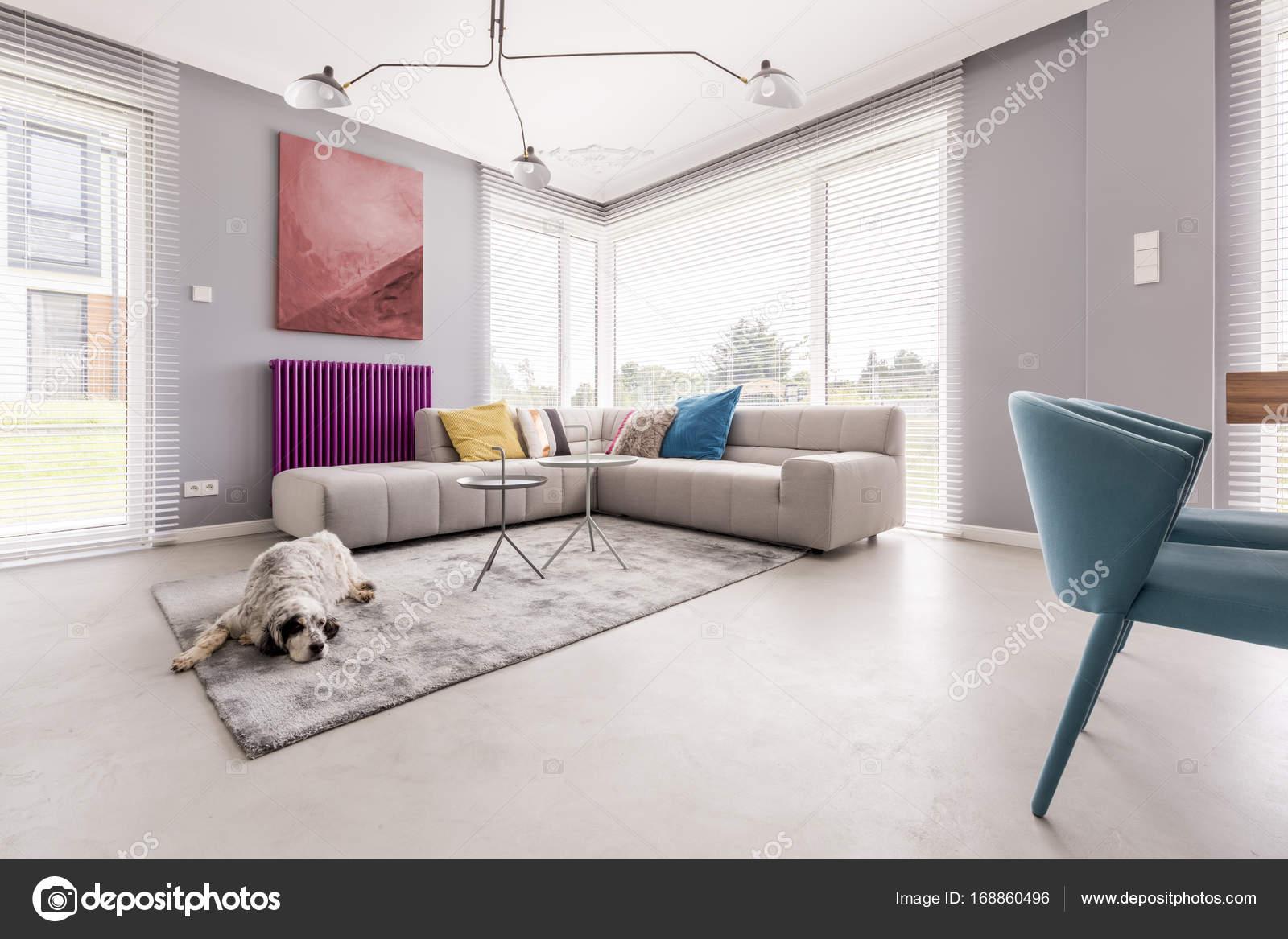 Hund in einem Haus-Interieur — Stockfoto © photographee.eu #168860496
