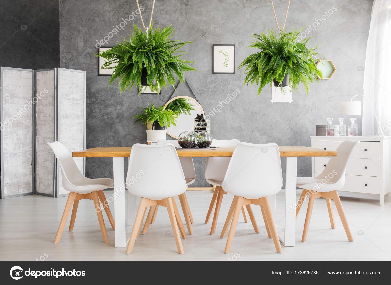 Gezellige eetkamer met varens — Stockfoto © photographee.eu #173626786