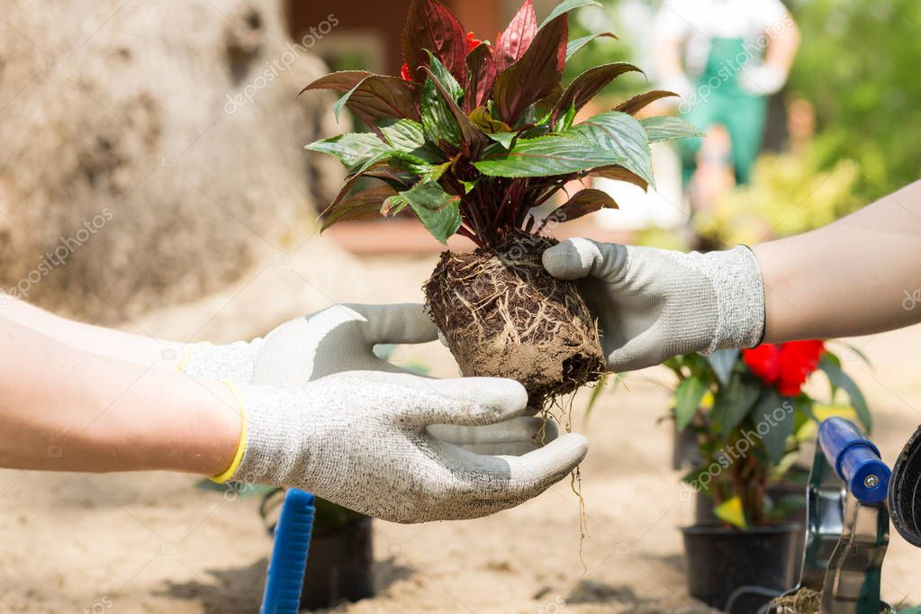 Treating each valuable plant with care