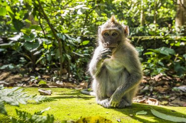 Eating Monkey in the Forest