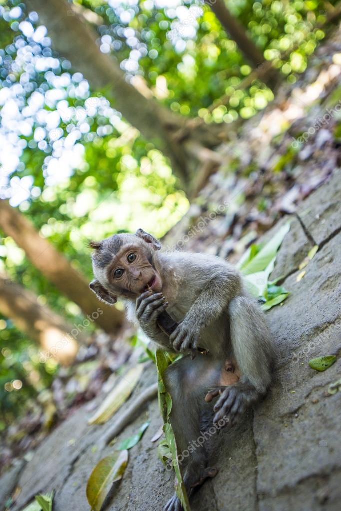 Monkeying Around in the Bali Forest