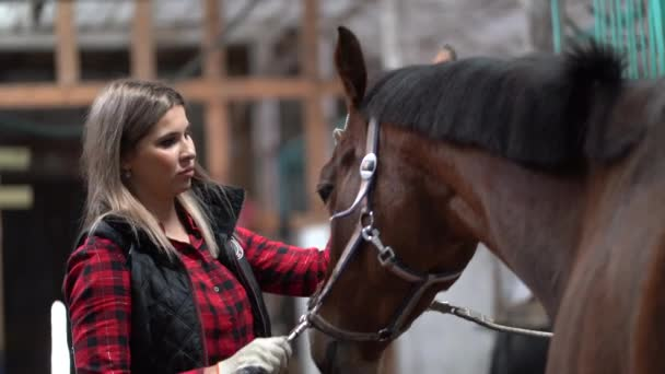 Krásná dívka v módní košili je čištění hnědý kůň v kabince