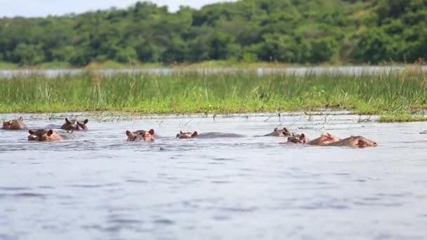 Landschaft mit einer Gruppe Flusspferde auf dem Nil