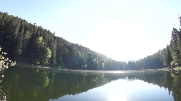 Large jezero v lese