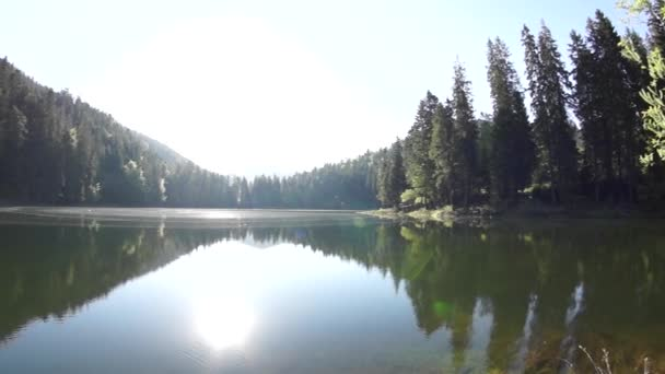 Large-lake in the forest
